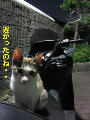 7_convert_20120806140231.jpg