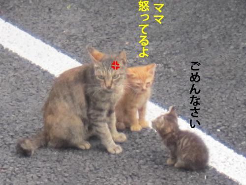 7_convert_20120809103804.jpg