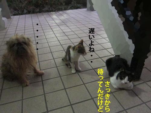 7_convert_20120820135918.jpg