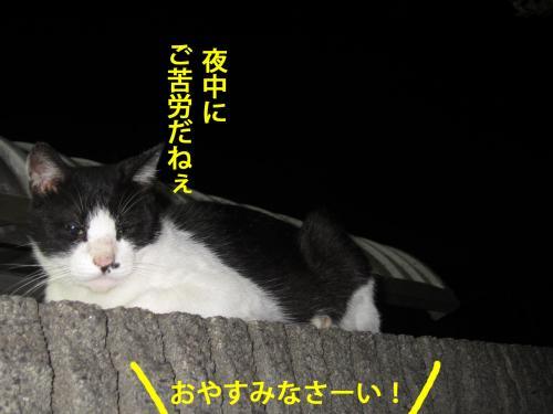 7_convert_20120824131844.jpg