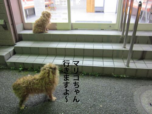 7_convert_20120908144843.jpg