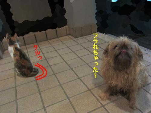 7_convert_20120925151841.jpg