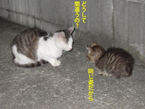 7_convert_20121029162548.jpg