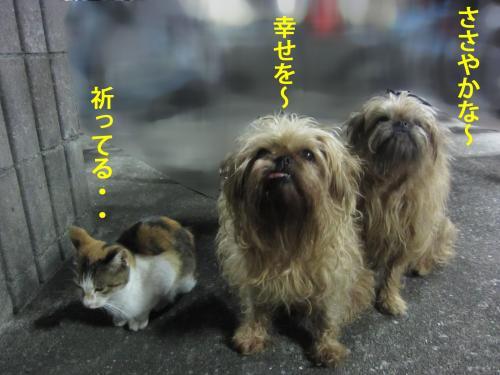 7_convert_20121030170758.jpg