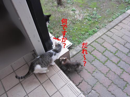 7_convert_20121031152739.jpg
