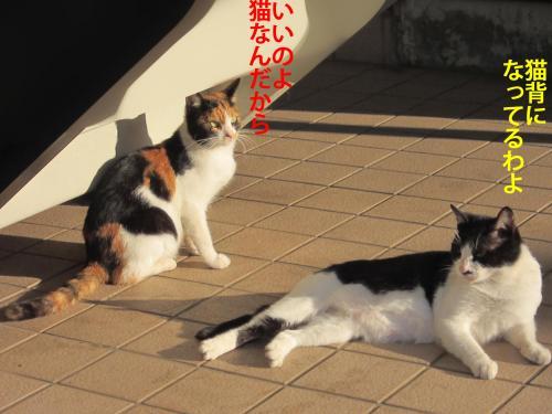 7_convert_20121101172152.jpg