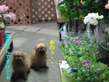 8-0_convert_20120711131416.jpg