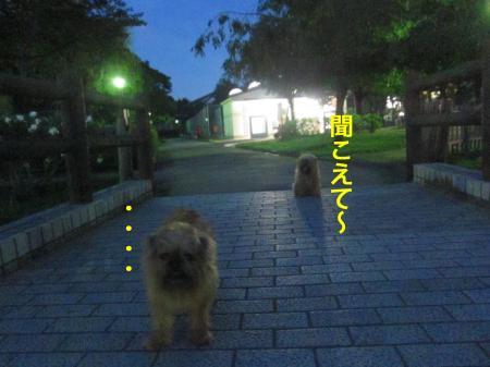 888_convert_20120713113102.jpg