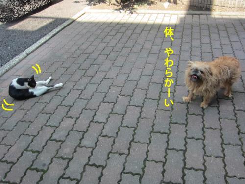 88_convert_20120907141546.jpg