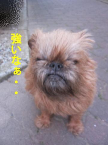 8_convert_20120512101933.jpg