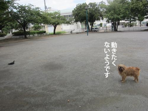 8_convert_20120906144359.jpg