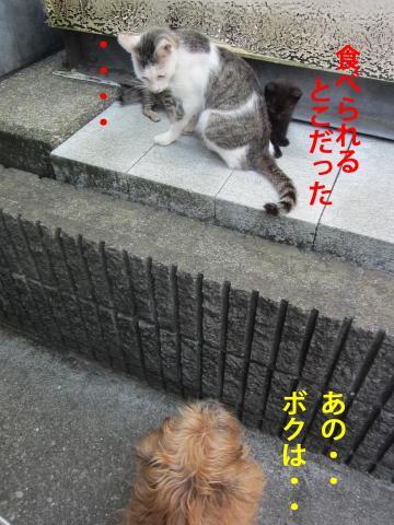 8_convert_20120910135419.jpg