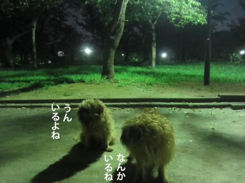 8_convert_20120913150254.jpg