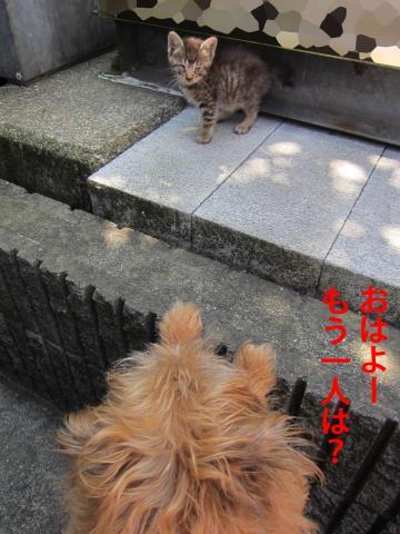 8_convert_20120923143019.jpg