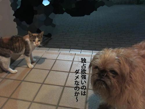 8_convert_20120925152823.jpg