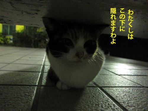 8_convert_20120926154858.jpg