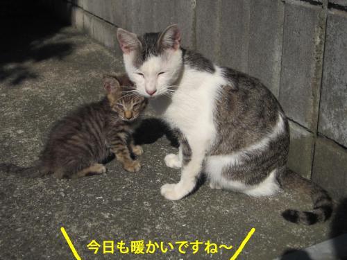 8_convert_20121016162336.jpg