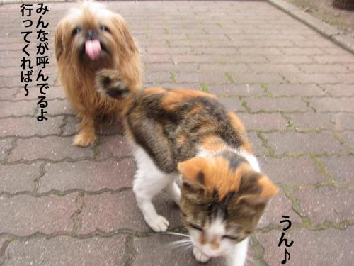 8_convert_20121020161031.jpg