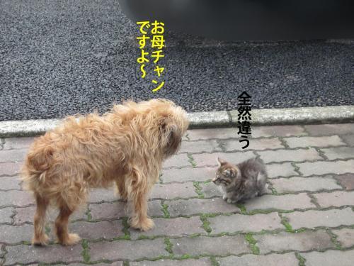 8_convert_20121029162608.jpg