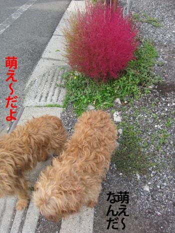 8_convert_20121105173104.jpg