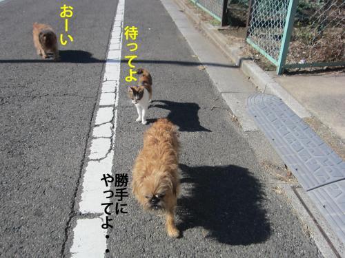 8_convert_20121108143620.jpg