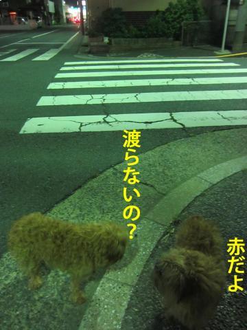 90_convert_20120821112621.jpg