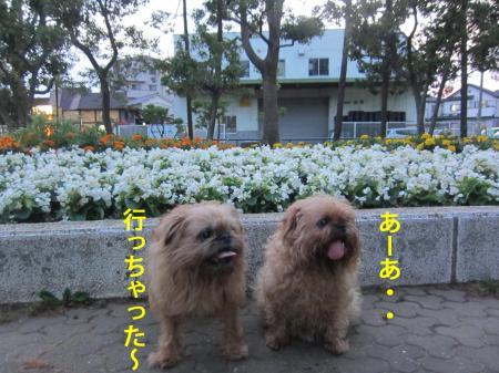 99_convert_20120712131340.jpg