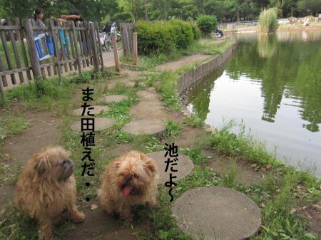 9_convert_20120606110517.jpg