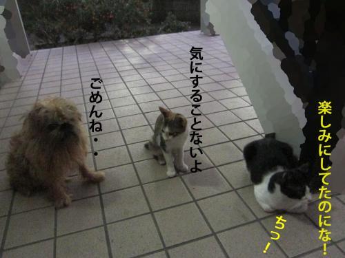 9_convert_20120820135955.jpg