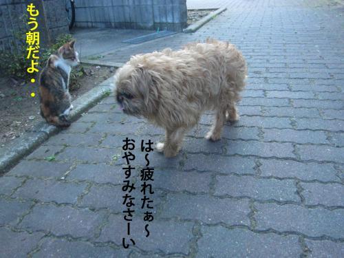 9_convert_20120824131922.jpg