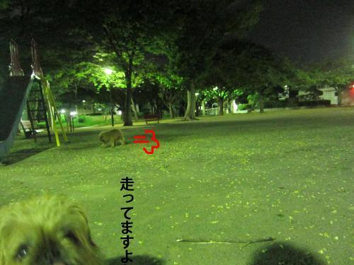 9_convert_20120827140345.jpg