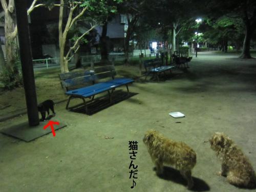 9_convert_20120913150311.jpg
