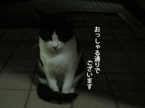 9_convert_20120924151612.jpg