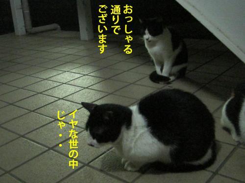9_convert_20120926154917.jpg