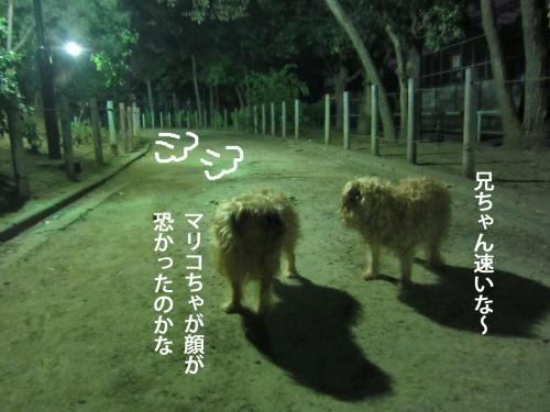 9_convert_20120928162427.jpg