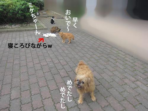 9_convert_20121020161050.jpg