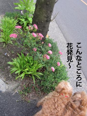 A_convert_20120520095529.jpg