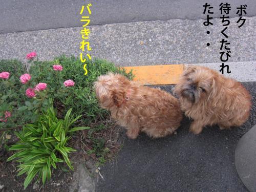 D_convert_20120520095818.jpg