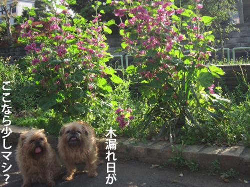 D_convert_20120524103336.jpg
