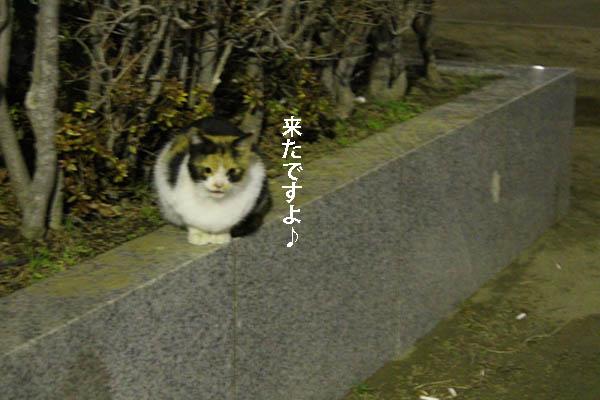 mukae3.jpg
