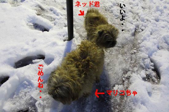 yukidoke7.jpg
