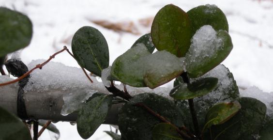 snow594.jpg
