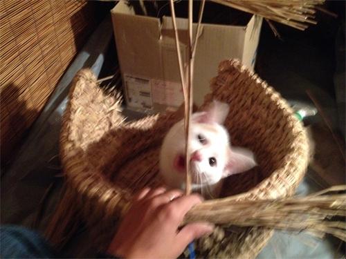 化け猫_2
