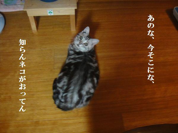 DSC04659.jpg
