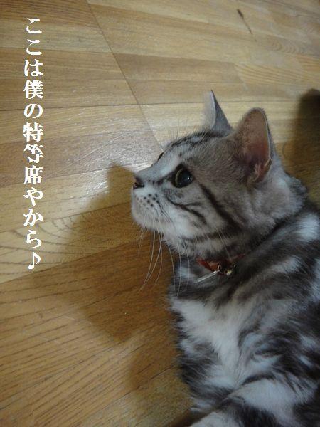 DSC05238_20121222231022.jpg