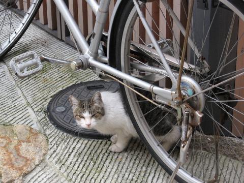 自転車バリア