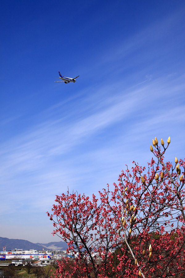 ANA A320-211 ANA555@下河原緑地展望デッキ(by EOS 50D with SIGMA 18-50mm F2.8 EX DC MACRO)