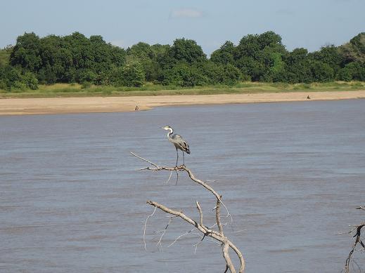 ルアンガリバーほとりの鳥@サウスルアンガ
