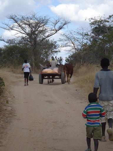 ナミアンガの牛トロッコ
