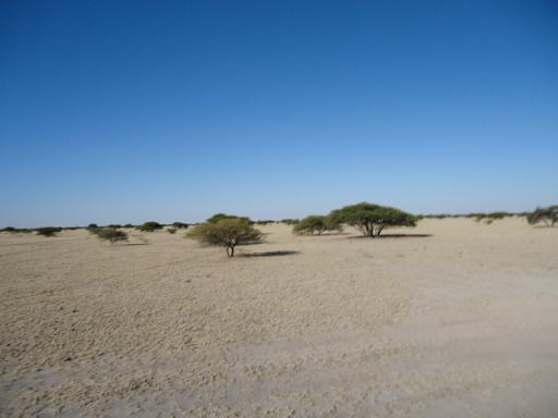 ボツワナの砂地の風景